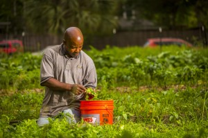 Marketing images for Plant It Forward Farms, Thursday, April 29, 2017 in Houston.